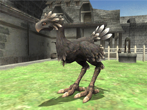 A Black Chocobo!